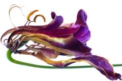 """noticia Art Lab recebe a exposição """"Flores no Caminho"""", da fotógrafa Carla Degurmendjian"""
