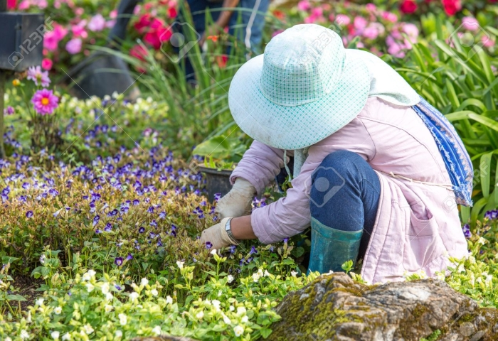 noticia Jardins Sustentáveis: Aprenda a preparar a compostagem em leiras com resíduos de jardim. Por Sérgio Foguel