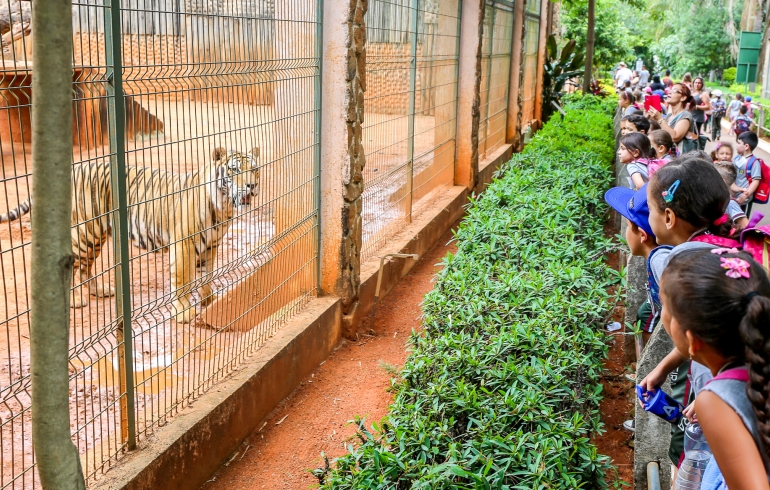 noticia Alunos da rede Municipal de Louveira visitam Zoológico de Americana